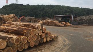 国産木材(杉、唐松等)